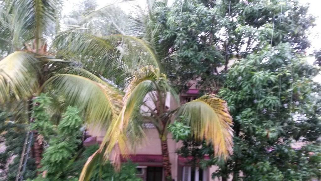 monsoon_4_2015